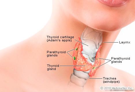 detail_thyroid2